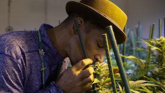 Episode 5: Cannabis